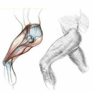 croquis de jambe morphologie