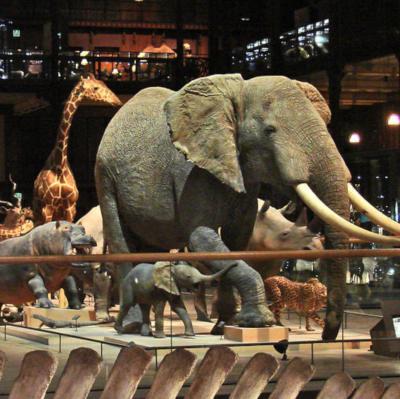 éléphant hippo et girafe dans la galerie de l'évolution