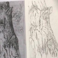 stage-dessin-paris-arbre-paysage